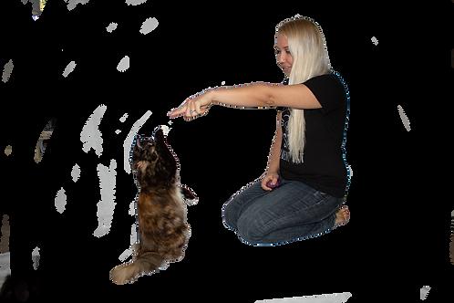 Cat Training DEPOSIT