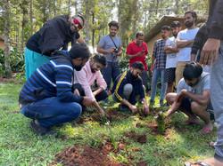 Tree Plantation Drive Coorg 3
