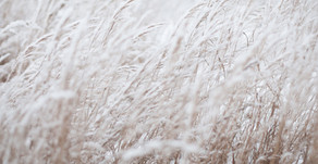 There's No Bad Weather... Five Things for the Homesteader to do During Winter Months