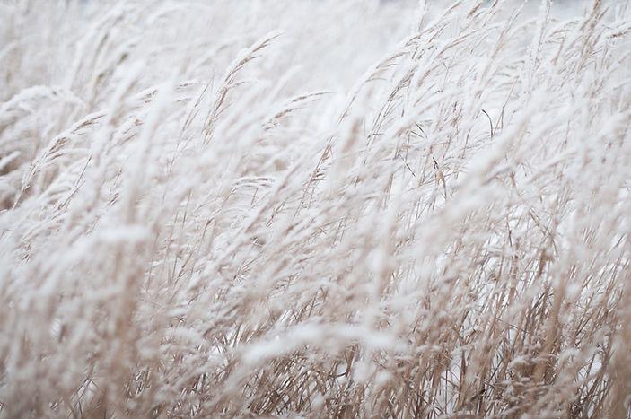 congelado campo