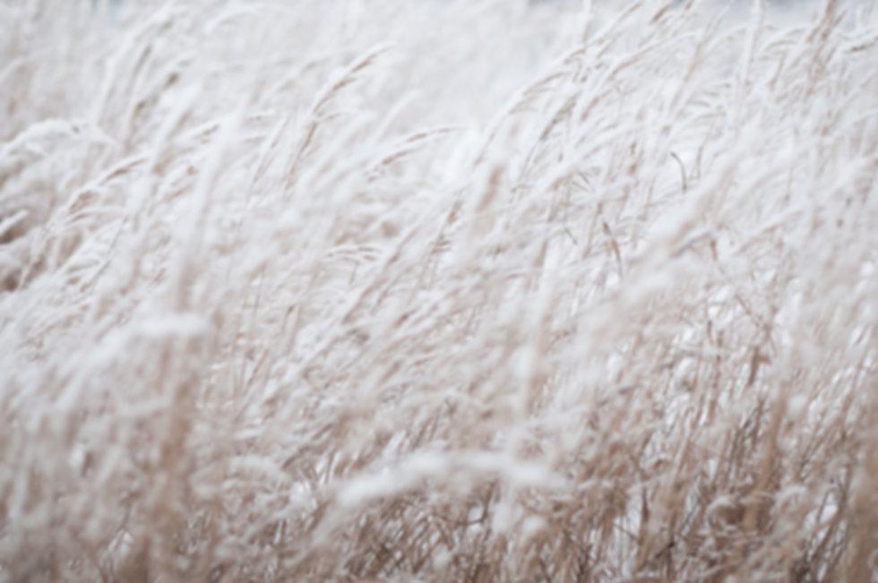 El campo congelado