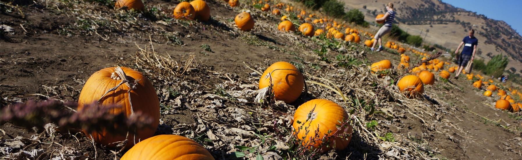Pumpkin panel
