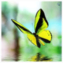 yellow butterfly.jpg