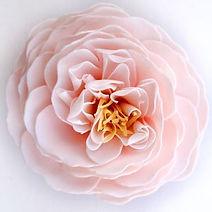 CherryBlossom1-1 (002).jpg