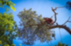 wycinka drzew szczecin / zahodniopomorskie