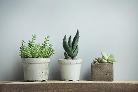 deco-plante-madeleine-decoration.webp