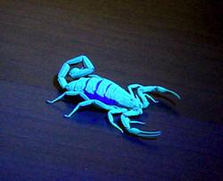 ScorpionHunter™ in action