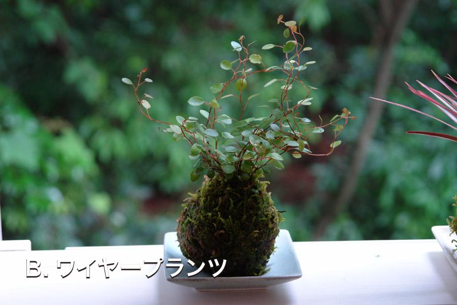 B.ワイヤープランツ.JPG