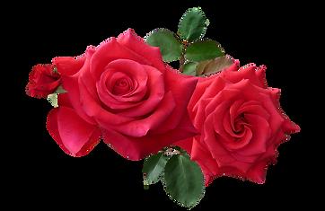 rose_PNG66992.png