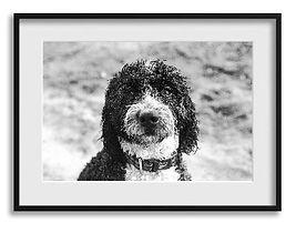 Professional framed photo.jpg