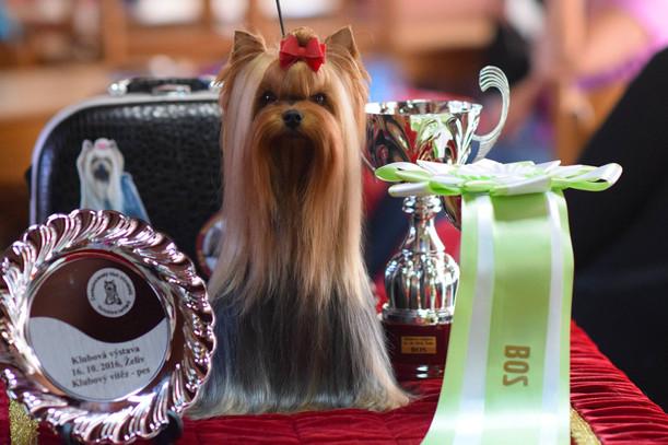 Новый Чемпион Чехии -                                                   BABY CHARM BRAVO BRAVISSIMO