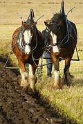 ploughing-horses.jpg