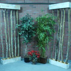 decrative trees and plants