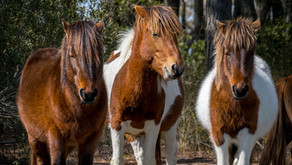Why Assateague Island Tours? It's All About The Experience