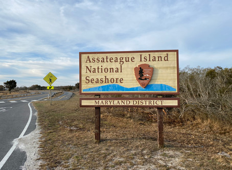 Managing The Bugs of Assateague Island and the OSV - Tips