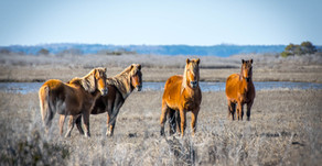 Assateague Island Monthly Weather - When Is The Best Time to Visit?