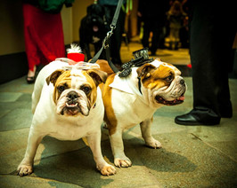Two dogs standing