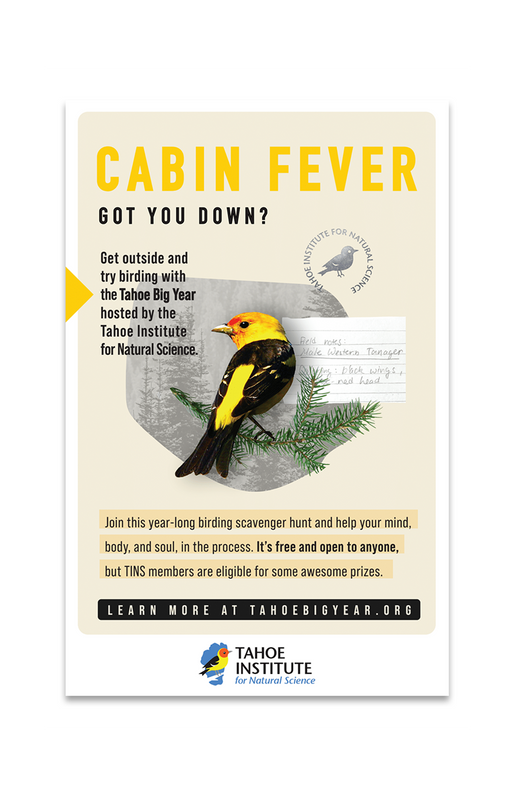 Cabin fever advertisement with tanager