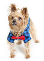 Small dog wearing bowtie