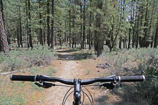 Riding a mountian bike through the sierra nevada mountains