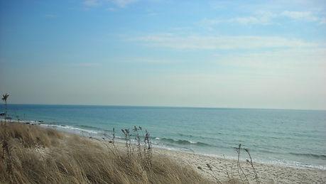 ws_Ocean_Sky_Beach_&_Grass_852x480.jpg