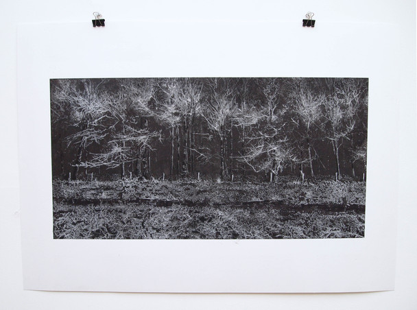 Forest, Chalk and charcoal on paper, 30x70cm