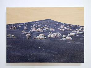 Bare, Oil on Panel, 70x50cm
