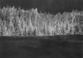 Boreal Forest, 100x70cm, Charcoal and Chalk on Paper