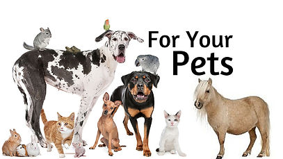 Essential Oils for your pets - hOIListicallyforward