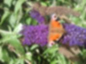 Power Animal Butterfly - hOIListically forward
