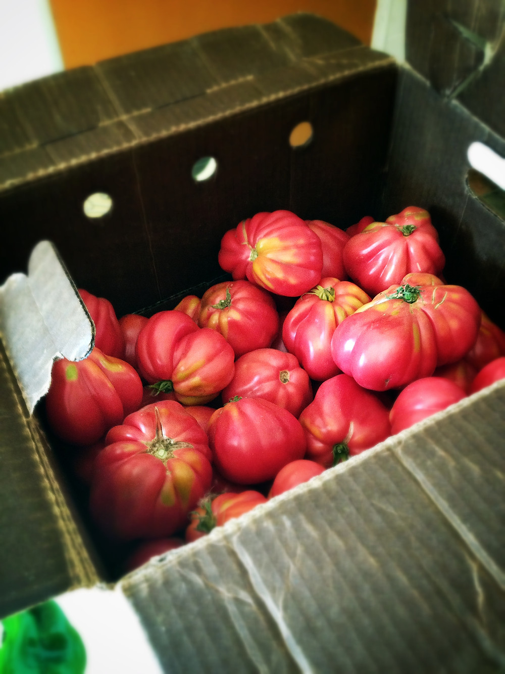 astiana canning tomatoes