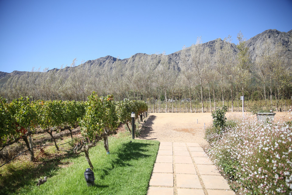 Holden Manz Wine Estate, Franschhoek Zandri du Preez Photography