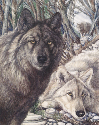 June Payne Hart: Wildlife Artist