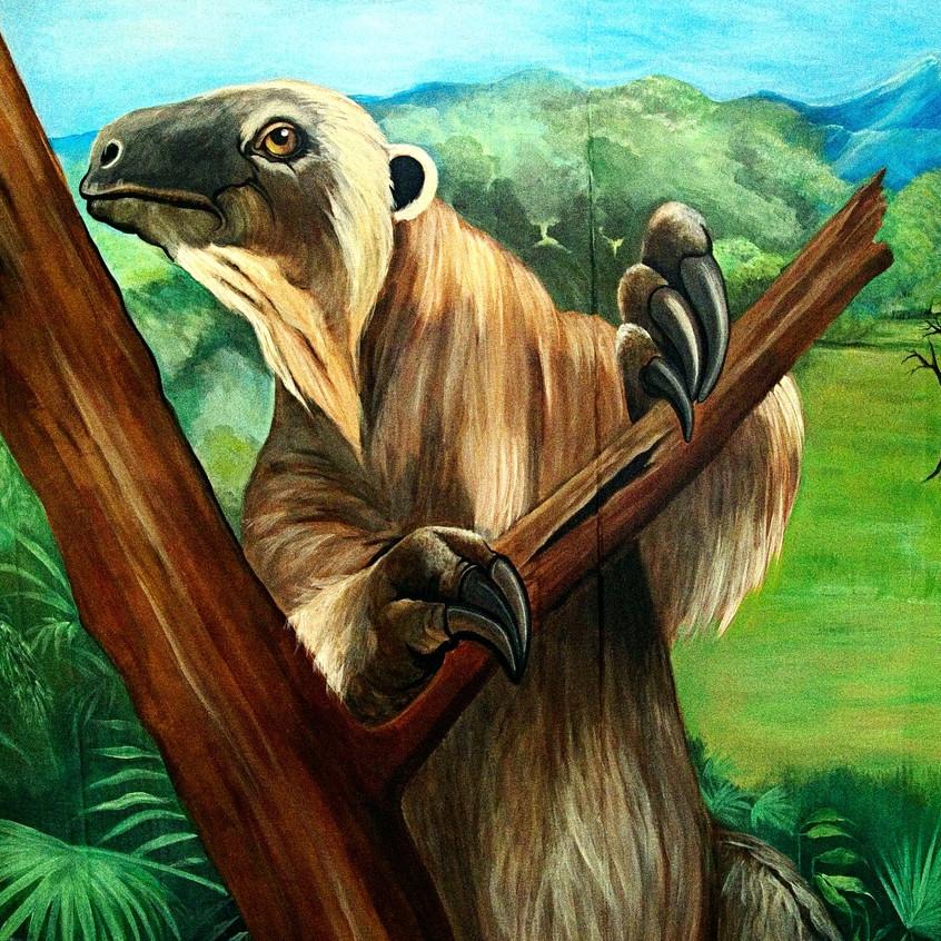 Ruth Cornell 2015 sloth 2_edited