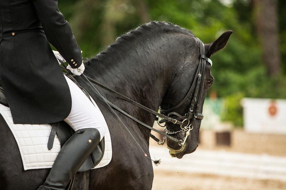 horse-3168576_960_720.jpg