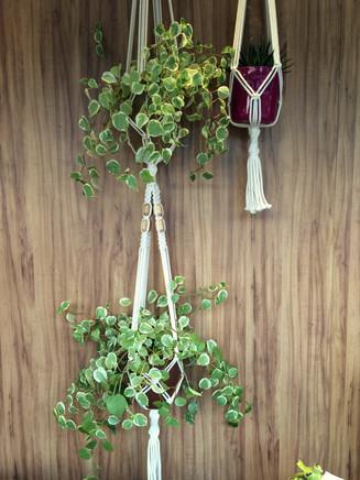 Vitrine Casa Nandos - Detalhes das Plantas