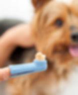 Dog-Toothbrush
