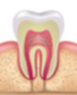 healthy-tooth-anatomy.jpg
