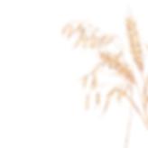 Logo hapanjuuri.fi-2.png