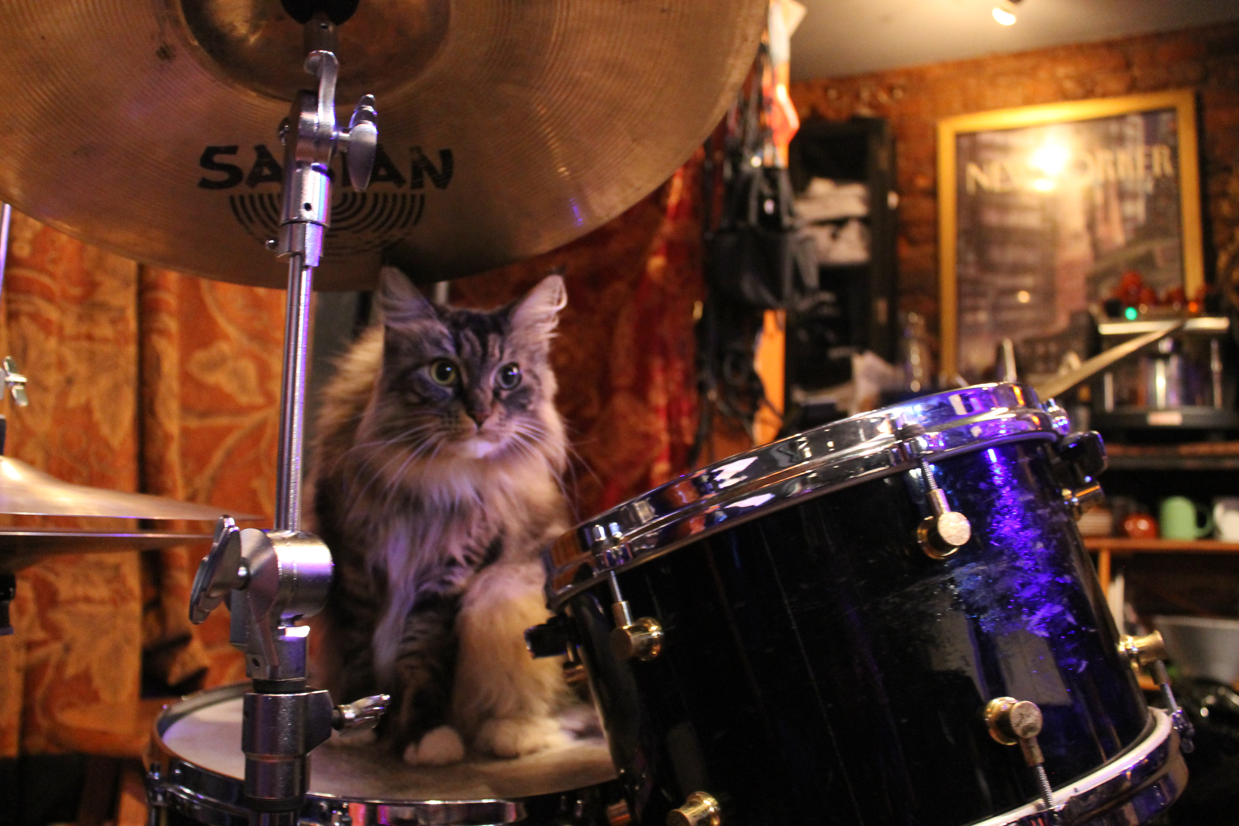 . . . but this cat wants to play!
