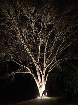 WW 27W TREE LIGHT1.jpg