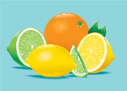 Citrus Illustration