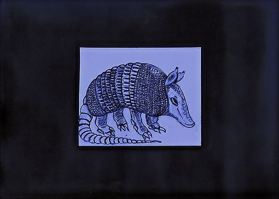 Armadillos Pen Drawing