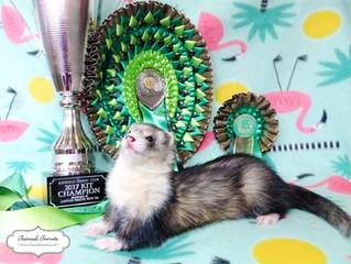 Marina - 2017's UK KIT CHAMPION