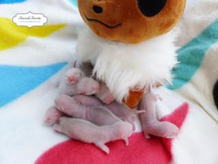 The Eeveelutions are now 1 week old!