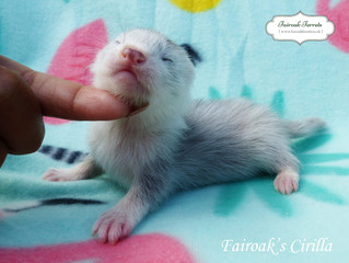 4 Weeks Old - The Sorceresses!