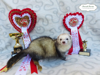 New Year, New Ferret Shows!