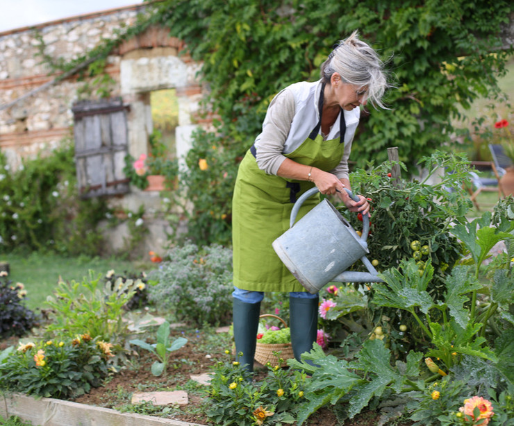 Senior woman watering a vegetable garden