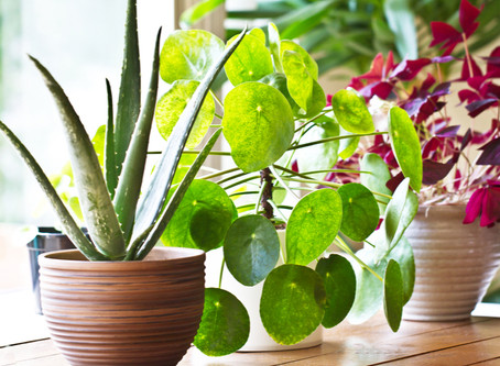 5 reasons plants mean healthier homes