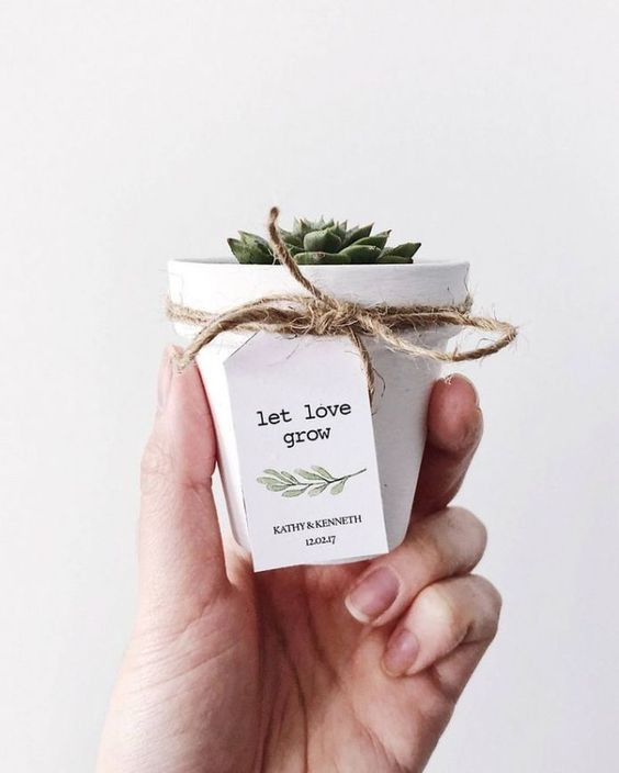diy wedding favours succulent.jpg